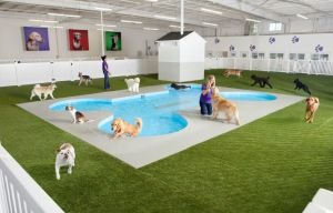 JFK Canine Pool